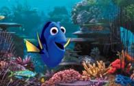 Finding Dory: le nouveau film de Pixar