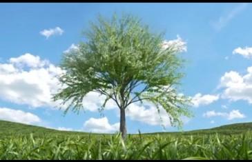 Votre arbre, notre terre au Centre Eaton à Montréal