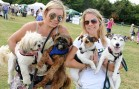 Un tout premier Dog Fest à Montréal