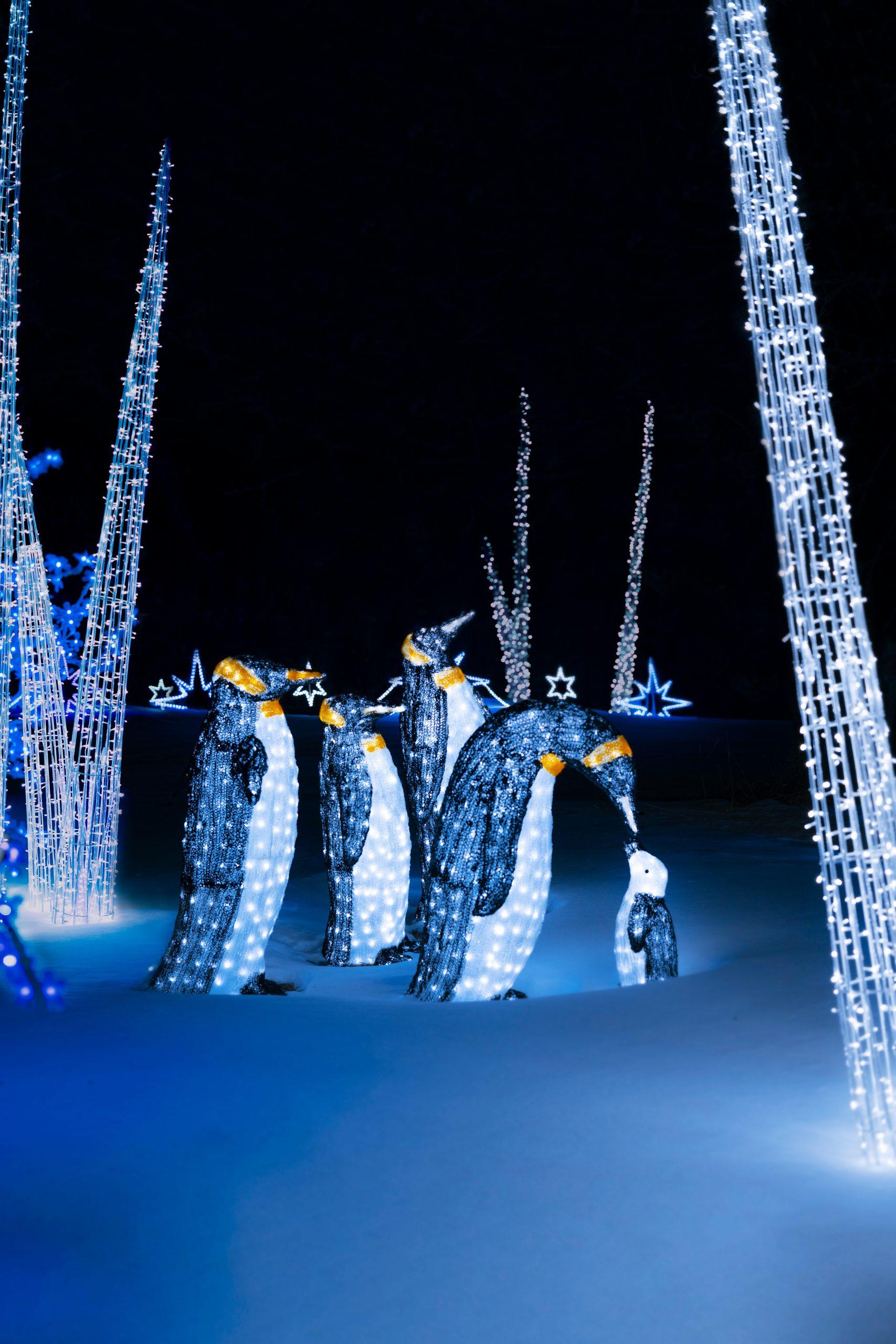 13-illumi-feerie-de-lumieres-en-voiture-illumi-a-drive-through-world-of-lights-scaled