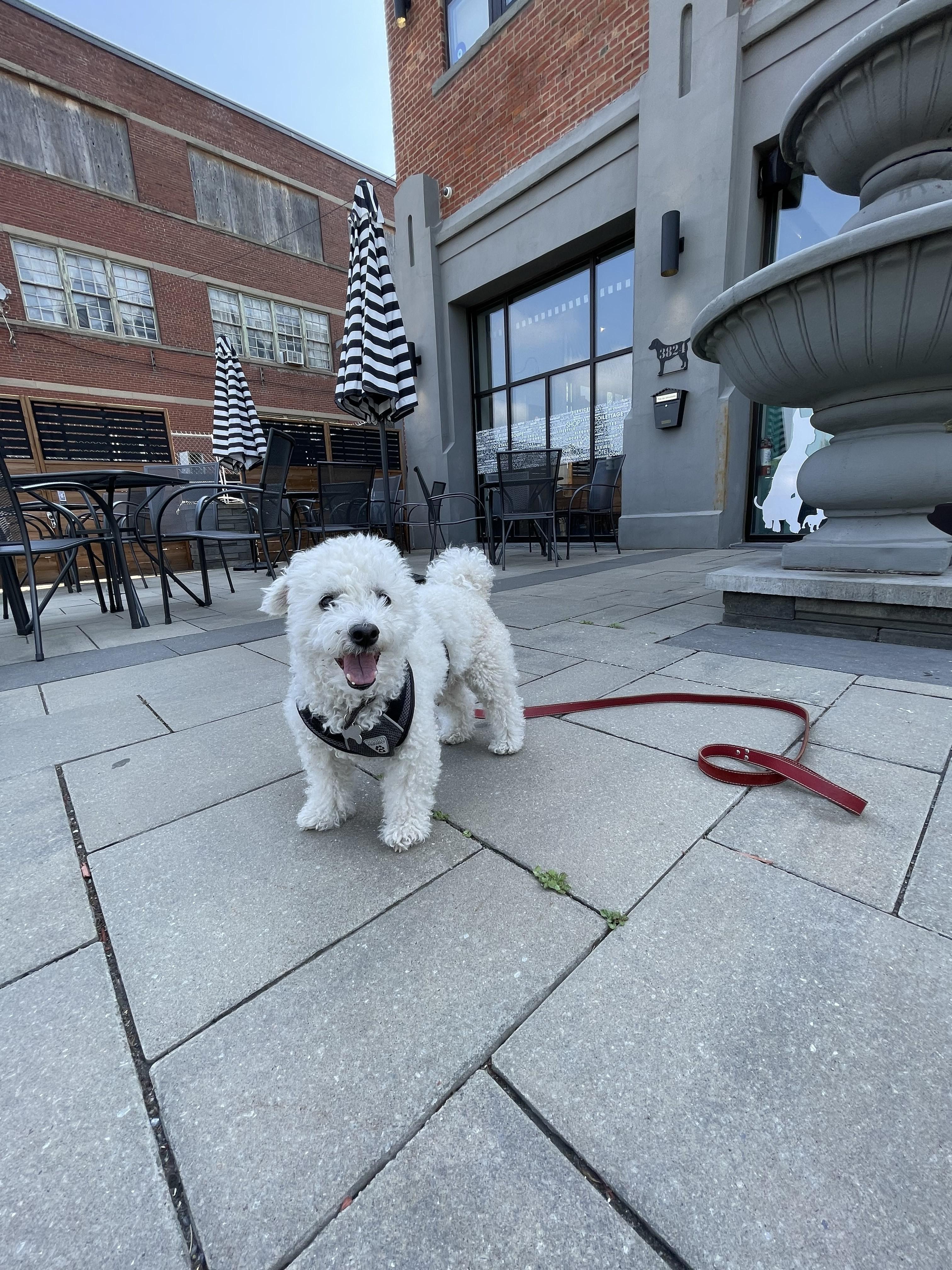 Ruby Café, la destination gourmande pour maîtres et chiens à Montréal