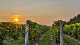 Un magnifique vignoble à vendre à moins d'une heure de Montréal pour 2.5M$